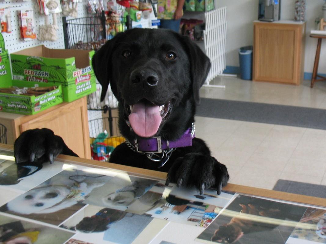 Grooming self serve dog wash solutioingenieria Gallery
